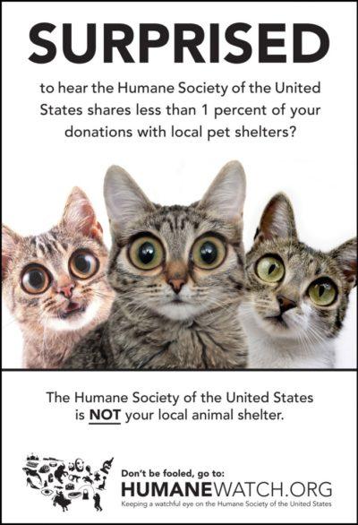 Surprised Cat Ad