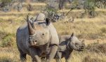 This Could Save Rhinos—Yet HSUS Wants to Criminalize It