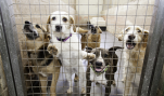 "PETA's HQ Should Be On ""PETA Kills Avenue"""