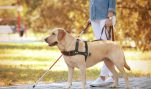 Why is HSUS Impeding Service Dog Training?