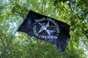 Is the Animal Liberation Front Involved in Rioting?
