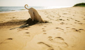 ASPCA Puts $20 Million Offshore Instead of Helping Animals