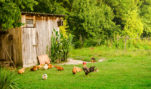 """Animal Activists Oppose """"Right to Food"""" Measure"""